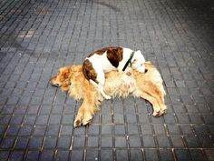 They make great beds...for other dogs.