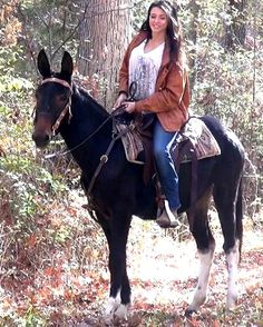 Here is Pepper.  Gaited Mules For Sale @ Missouri Mule Company