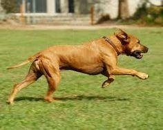 running dog에 대한 이미지 검색결과