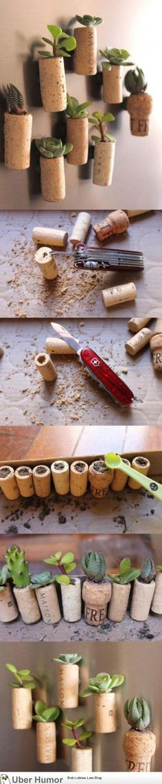 cork & succulents, cute dyi project