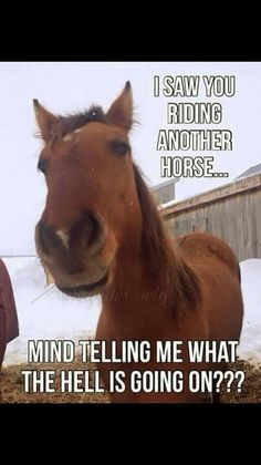 Cowgirls und Pferde Cowgirls and Horses - Horses Funny - Funny Horse Meme - - # Funny Horse Memes, Funny Horse Pictures, Funny Horses, Cute Horses, Pretty Horses, Horse Love, Beautiful Horses, Horse Humor, Cute Animal Memes