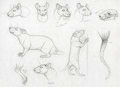 Rat Anatomy Practice by *TrikSilverwolf on deviantART