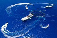 Bluefin Tuna Action in the Mediterranean. Photographer: Paul Hilton / Greenpeace