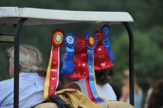 "the ""my child is an honor student"" bumper sticker of the equestrian world."