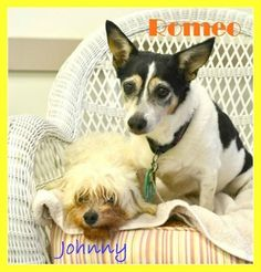 Can someone give these two sweethearts a home? They don't deserve to die in a shelter.