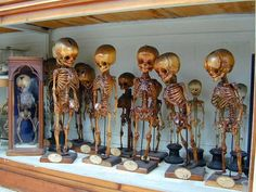 Musée d'anatomie de Florence