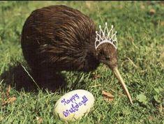 Kiwi Bird, Happy Birthday, Cakes, Happy Aniversary, Happy B Day, Pastries, Torte, Cookies, Animal Print Cakes