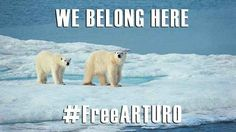 Last week, the hashtag #FreeArturo was trending worldwide as campaigners called for Arturo to be relocated. | People Are Trying To Rescue This Depressed Polar Bear From A Zoo In Argentina Before It's Too Late http://www.change.org/en-CA/petitions/please-allow-arturo-to-have-a-better-life-in-the-assiniboine-park-zoo-in-canada