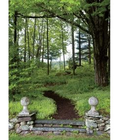 lush scenery, dirt path, spindly trees, 1 substantial tree, cement path markers