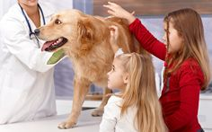 Schedule your appointment for check up of your pet health here at https://myunikorn.com/vets/   #vets #pethealth #myunikorn