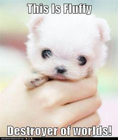 fluffy!!!!!!!!!!