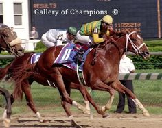 Charismatic(1996)Summer Squall- Bali Babe By Drone. 3x5 To Sir Gaylord, 4x4 To Something Royal And Bold Ruler, 4x5 To  Tom Fool, 5x5 To Mahmoud. 17 Starts 5 Wins 2 Seconds 4 Thirds. $2,038,064. Won 1999 Ky. Derby(G1), Preakness(G1), 3rd Belmont(G1).