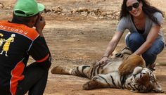 Cruel 'Tiger Temple' Is Finally Losing All Of Its Tigers