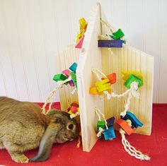 House of Toys : Pet Rabbit Toys, Homemade Toys for Rabbits $49.97