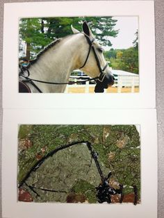 I used a photo that i took at the deerfield fair and used the basic edit. i then printed to copies of it (5x3.5). On one of the copies i used dry cement on and put leaves all over it to make the picture.