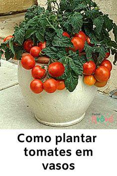 Garden Veranda Ideas, Herb Garden, Vegetable Garden, Container Gardening, Gardening Tips, Beautiful Gardens, Beautiful Flowers, Green Life, Flower Crafts