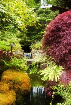 Butchart Gardens, Victoria, BC - We wanted to go there for 25 years and finally did it for our 25th Anniversary!