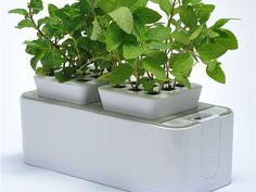 indoor gardening - Google Search