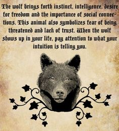 This wolf.the tumbledown wolf.read it and pay attention. Wolf Spirit Animal, Animal Spirit Guides, Lien Social, Of Wolf And Man, Wolf Stuff, Wolf Pictures, Indian Pictures, Wolf Quotes, Wolf Love