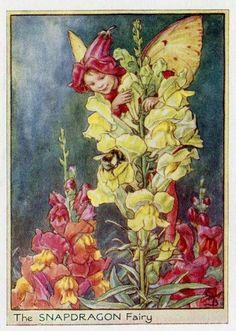 Snapdragon Flower Fairy Vintage Print c1950 by TheOldMapShop