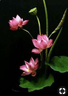 Beautiful Flowers Wallpapers, Most Beautiful Flowers, Exotic Flowers, Pretty Flowers, Lotus Kunst, Lotus Art, Lotus Flower Pictures, Flower Photos, Motif Floral