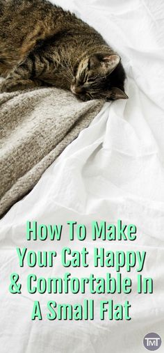 how to make your cat happy and comfortable in a small flat. From furniture and t… how to make your cat happy and comfortable in a small flat. From furniture and toys to plants. Cat Care Tips, Pet Care, Cat Whisperer, F2 Savannah Cat, Munchkin Cat, Outdoor Cats, Cat Accessories, Cat Health, Beautiful Cats