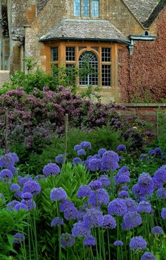 Hidcote Garden, Gloucestershire, England; a National Trust property near Chipping Campden in the Cotswolds. Oh my goodness!!! Look at the flowers!!!