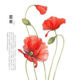 hand drawing watercolor plants--poppy by GaloShining.deviantart.com on @deviantART