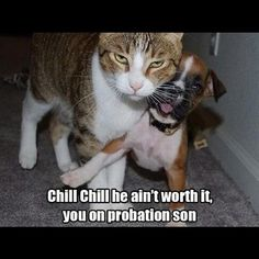 20 Animal Pictures That Will Make You LOL - Ned Hardy | Ned Hardy
