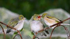 Cute Owls Coffee Two Whimsical Desktop Image Birds http://ift.tt/2ymUWvL