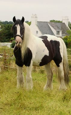 Horse on Island of Guernsey