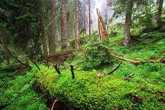 Die schönsten Waldwanderungen der Schweiz
