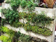 http://www.google.no/url?sa=i&rct=j&q=&esrc=s&source=images&cd=&cad=rja&uact=8&ved=0CAYQjB0&url=http%3A%2F%2Ftheemergencyfoodsupply.com%2Farchives%2Fplant-an-herb-garden-on-your-wall&ei=n0ZKVOGkJej5ywOI9oGIBg&bvm=bv.77880786,d.bGQ&psig=AFQjCNFLxsLZBlswiUVb8l0v-Xl1Y6i6zg&ust=1414240088590790