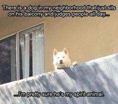 Spirit animal?