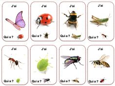 Math For Kids, Activities For Kids, Grade 2 Science, Petite Section, Teaching French, Bugs And Insects, Preschool, Nature, Books