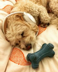 dog during July 4th fireworks.1.place Bose sound reducing headphones ...
