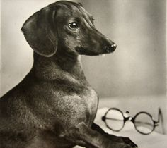 Vintage Dachshund photo postcard 1920 by DogDayAfternoons on Etsy, $7.50