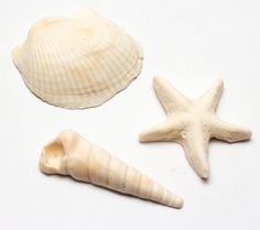 Large realistic fondant shells and starfish by SeasonablyAdorned
