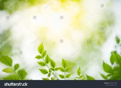 Closeup nature view of green leaf on blurred greenery background in garden with copy space using as background natural green plants landscape, ecology, fresh wallpaper concept. Greenery Background, Green Leaf Background, Nature Green, Nature View, Green Plants, Ecology, Green Leaves, Flyer Design, Cool Art