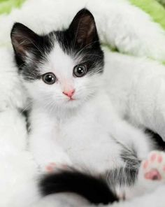 Cute Cat Pictures Coloring plus Cute Kittens And Puppies And Bunnies Wallpaper . Cute Cat Names Designer down List Of Cute Animals To Draw Fluffy Kittens, Little Kittens, Cute Cats And Kittens, Baby Cats, I Love Cats, Kittens Cutest, Ragdoll Kittens, Pretty Cats, Beautiful Cats