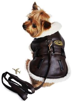 223fde82b6e Aviator Bomber Pilot Jacket Harness with Airplane Themed Charm   Leash in  color Chocolate. Daisey s Doggie Chic