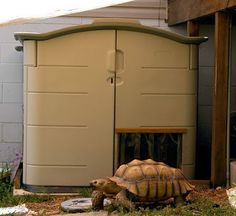 """Frankie the tortoise"" and his dream enclosure"