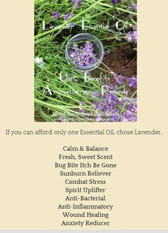 Lavender Uses & Benefits, Aromatherapy & Remedy