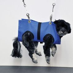 Groomers Bbs Homemade Sling And Gh Poodles And Grooming