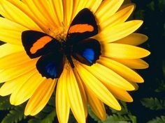Flower with beautiful butterfly