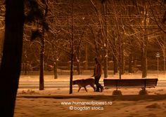 Humans of Ploiesti Horses, Animals, Animales, Animaux, Horse, Animal, Animais, Dieren