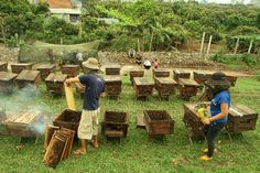 Nghề nuôi ong giống như đánh bạc với trời, tìm được nơi nhiều hoa gặp thời tiết tốt thì chẳng mấy chốc trở thành tỷ phú