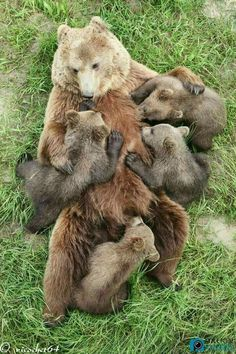 This photo makes us so happy! Happy bear family More amazing wildlife photos here: http://postkitty.com/comedy-wildlife-photography-awards