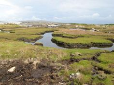 Why We Need To Garden Without Peat & How To Use Peat Free Substitutes | Permaculture Magazine