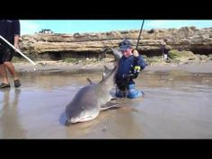 Daniels Dickinson aged 7 lands a monster Ragged tooth of 84kg - YouTube